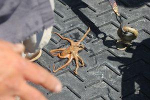 octopus-onboard-lander-is-returning-to-sea